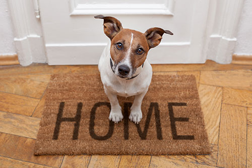 Dog Doors Professionally Installed Boise